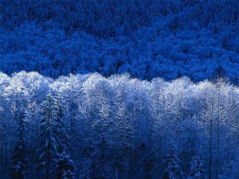 겨울.jpg
